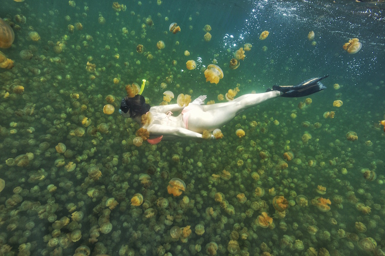 Christina Cindrich - Jellyfish Lake in Palau