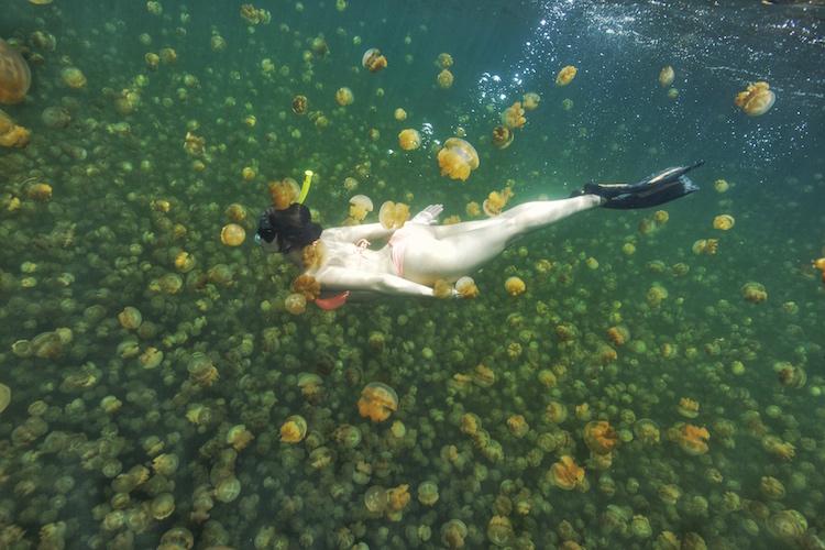 Christina Cindrich - Jellyfish Lake in Palau