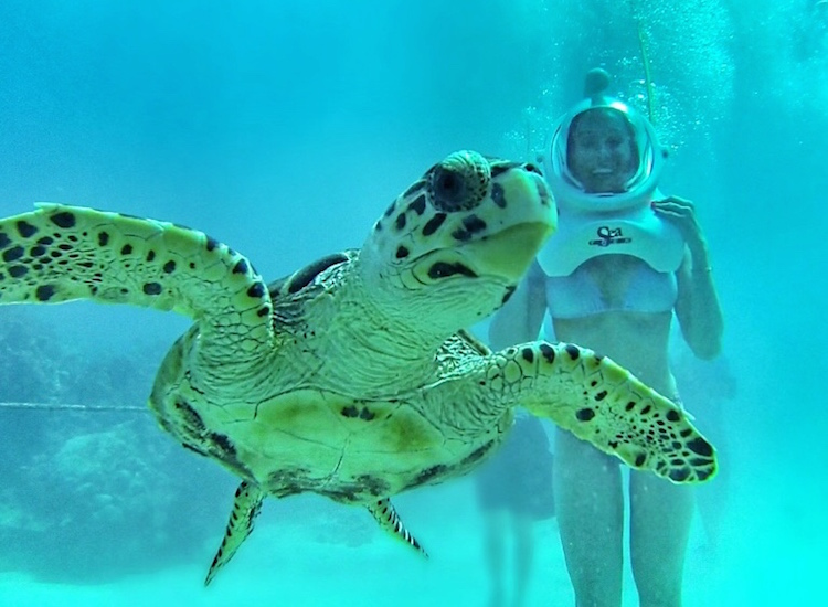 Christina Cindrich - Sea Turtles - HDFMagazine.com Interview