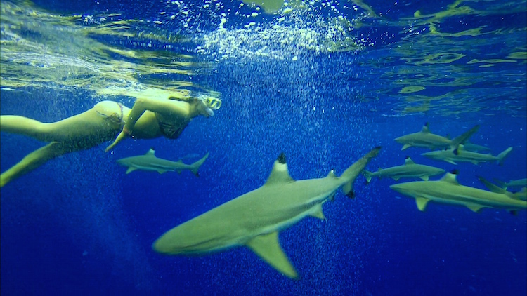 Christina Cindrich - Swimming with Sharks - HDFMagazine.com Interview